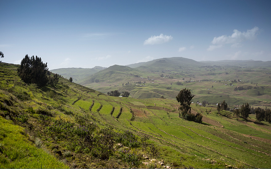 Terrace Farming in Ethiopia