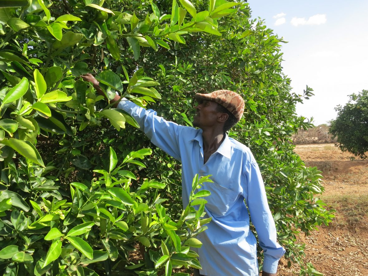 A farmer stands next to a tree in Somaliland