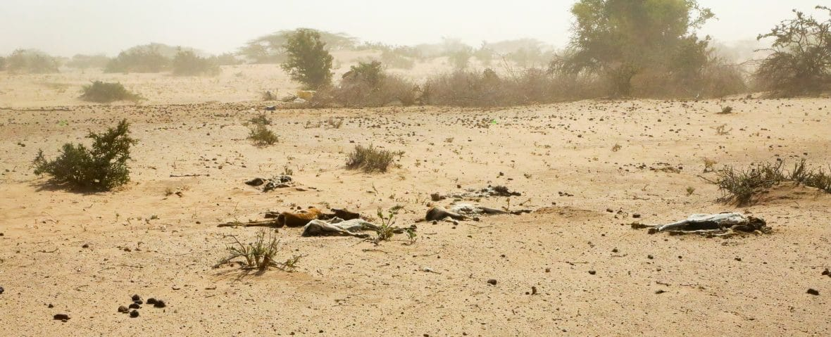 Dead goats in Northern Kenya